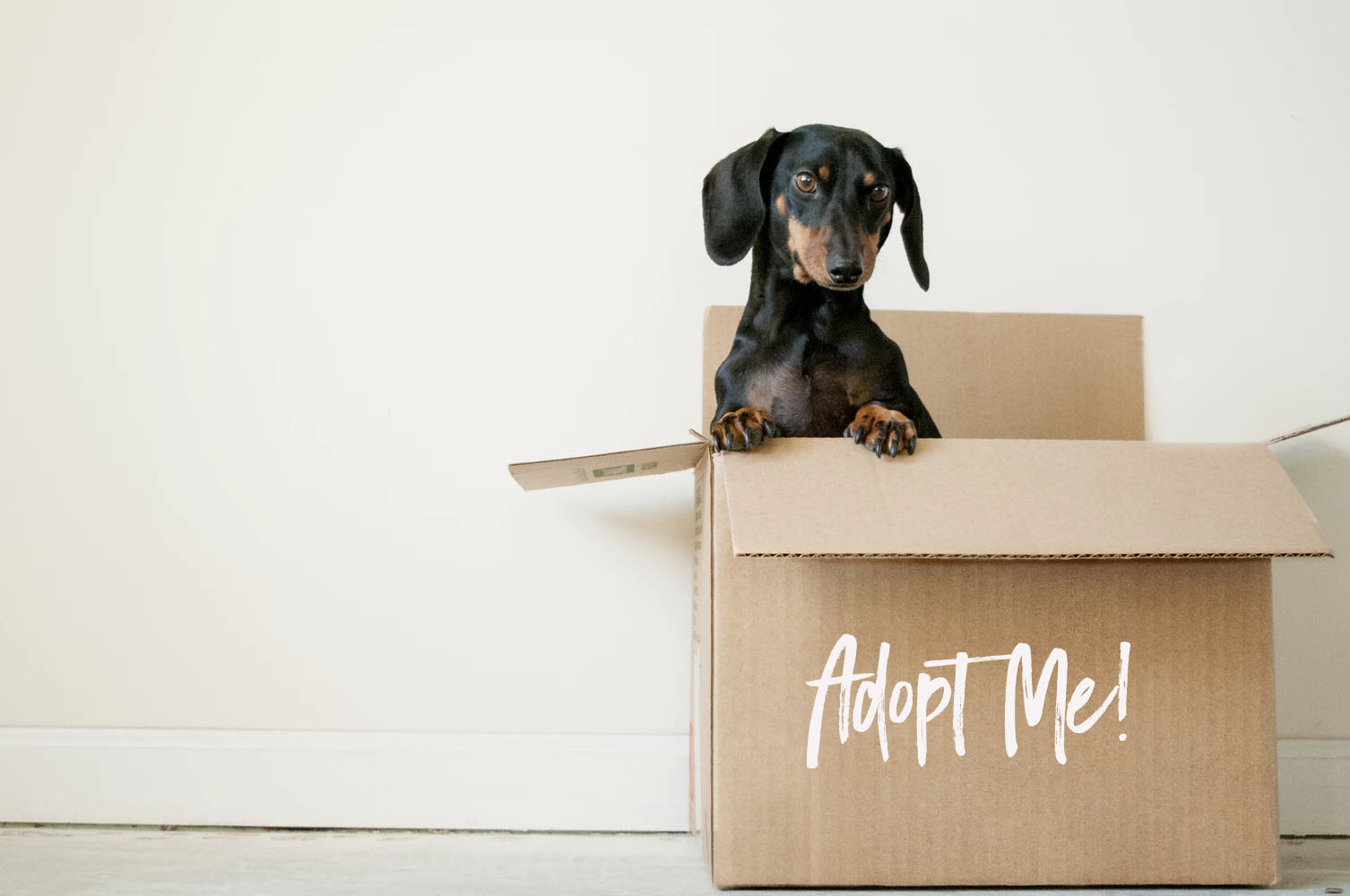 "A dog peeking out of a box with the words ""adopt me"""